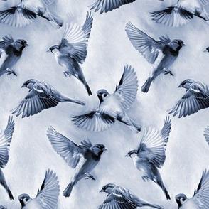 Sparrow Flight blue - small
