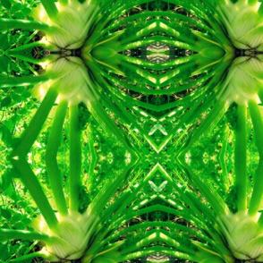 fennel 1