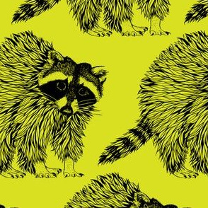 Raccoon Lime