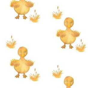 Ducky_reid