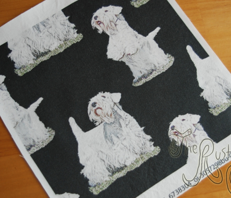 Posing Sealyham terriers - black