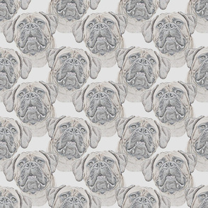 Bullmastiff faces