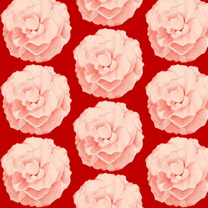 Rose on Red