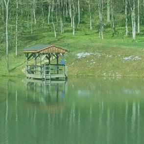 Green Nature Pond