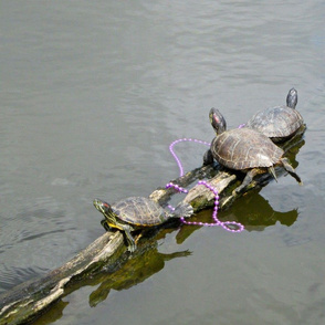 Mardi Gras turtles 1