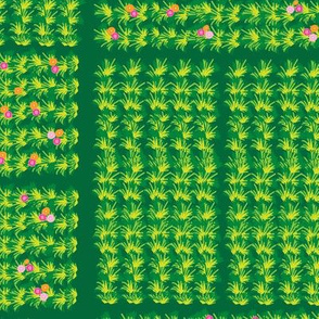 Acres of Roses