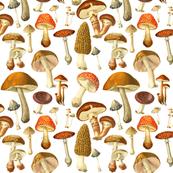 vintage botanical fungus sm.