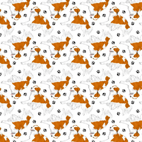Trotting Kooikerhondje and paw prints - white