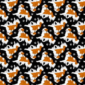 Trotting Kooikerhondje and paw prints - black