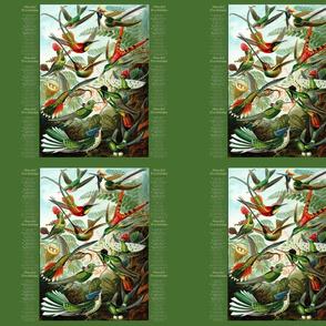 Haeckel_Trochilidae_green
