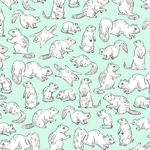Rodents / Gnawers | White on Aqua/Mint
