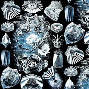 Haeckel Teleostei2