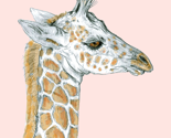 Rbaby_giraffe_on_pale_pink_thumb