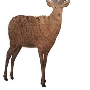 Brown Watercolor Stag Deer