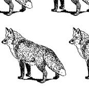 FOX_SCETCH