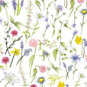 Wildflower medley with white background