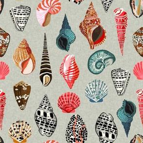 seashells // shells summer beach linen