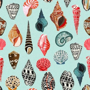 seashells // shell shells beach summer mint ocean water sea nautical shell