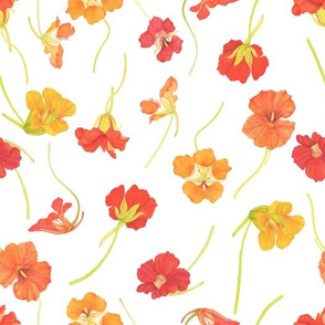 Watercolor Nasturtiums