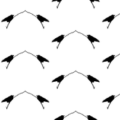 Birds in  Silhouette
