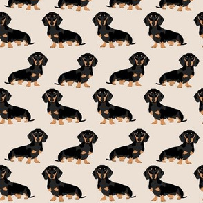 doxie dachshund weiner dog pet dogs dog weiner dog weener dog wiener dog cute pet dog