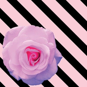 Rosey Stripes