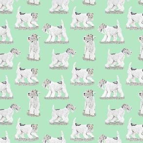 Playful Wire Fox Terrier - green