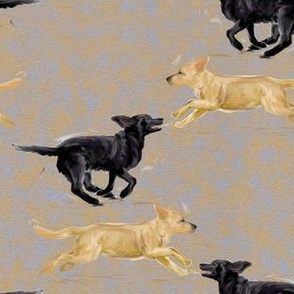 Labrador Retrievers Running