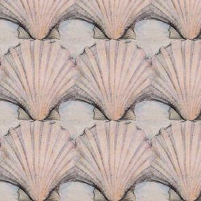 Scallop shell study
