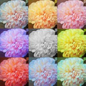 Fabulous Tutti-Fruitti Florals