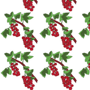 Redcurrant drawing