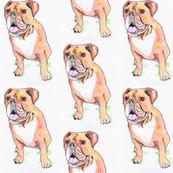 English bulldog | illustrated baby or children's fabric
