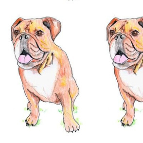 English bulldog | illustrated baby or children's fabric