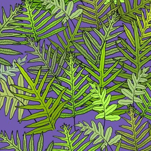 Laua'e Ferns on Purple