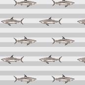 Grey sharks