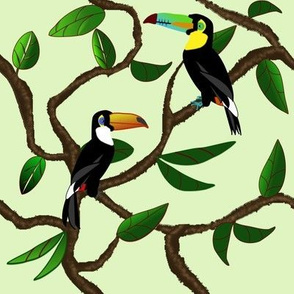Toucans in the rubber plant tree
