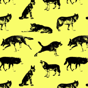 """Wolves on Yellow (2"""")"""