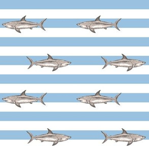 demi stripes sharks