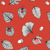 Red Physalis and skeleton leaves