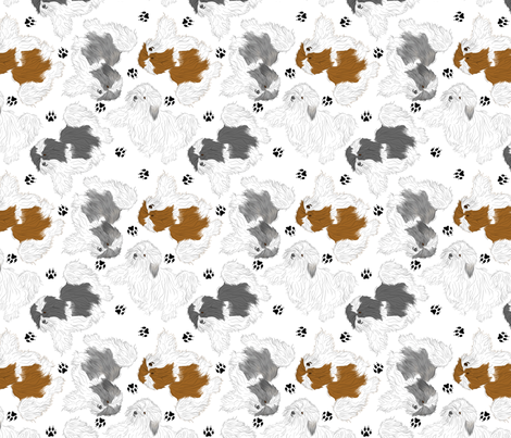 Trotting Havanese and paw prints - white
