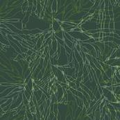 Overlapping seaweeds