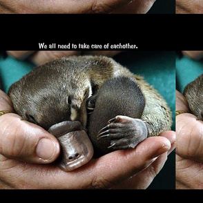 babyplatypus