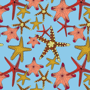 starfish_repeat_print_square_