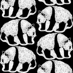 Scratchboard Pandas