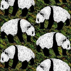 Scratchboard Pandas 3