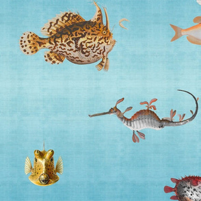 Curious Fish Wallpaper and Fabric