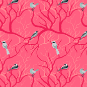 Birds_Pink