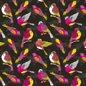 Funny sparrows