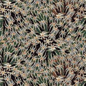 Cacti#3
