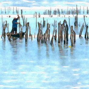 Oyster Harvest